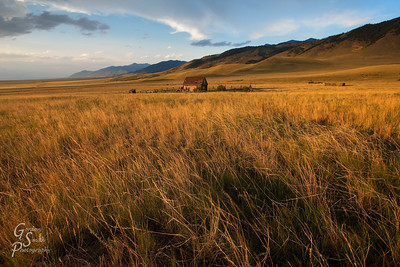 Montana Wind and Grass with a distant view of clouds, mountains at sunset.