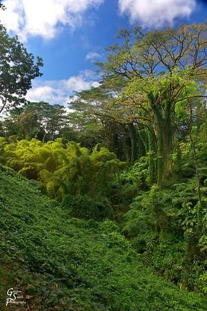 Hawaiian Rain Forest