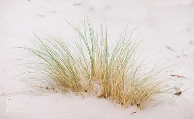 White Sand and Delicate Grasses