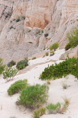 White Sand Desert Garden at the Cliffs