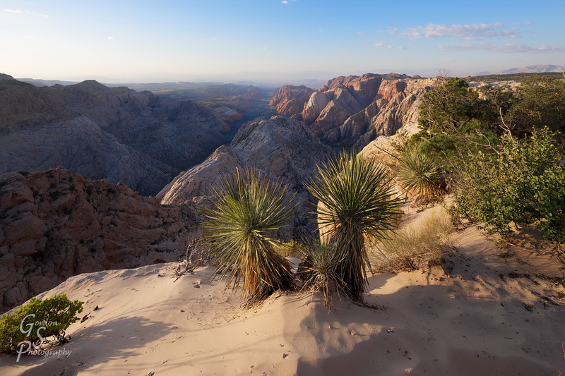 Two Yucca at Snow Canyon Overlook