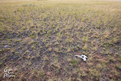 Final Resting Place in wind-swept ranch land of Montana