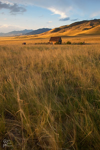 Wind Blowing Fields of Grass with abandoned Cabin in the distance.  Madison Mountain range is far away.