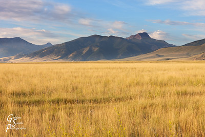 Golden Grass and Sphinx Mountain taken at sunset in Montana