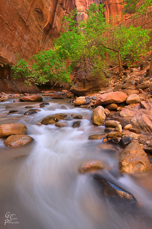 Beauty of Zion Narrows