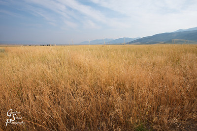 Dry Grass Field on a warm summer day