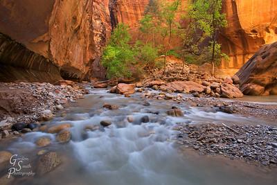 Golden Canyon Walls, Zion Narrows