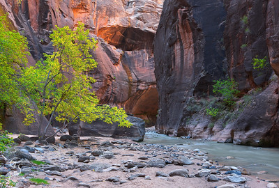Zion Autumn in the Narrows