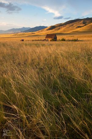 Amber Waves of Grain and Grass