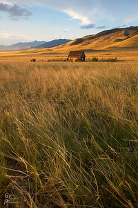 Amber Waves of Grain and Grass at sunset in Montana