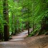 Hermitage Woods Trail