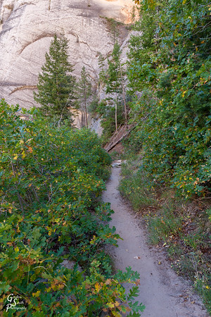 West Rim Trail through Bushes
