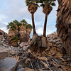 Palm Tree Debris