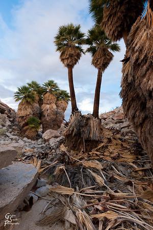 Palm Tree Debris