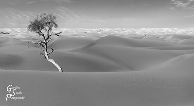 Nest and Tree in Dark Sand Dunes