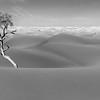 Nest and Tree in Dark Sand Dunes