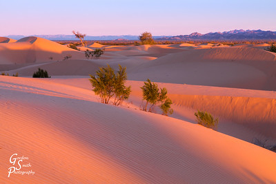 North Algodones Dunes Sunrise