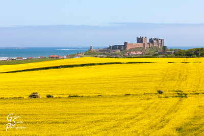 Bamburgh beach and Rapeseed Field
