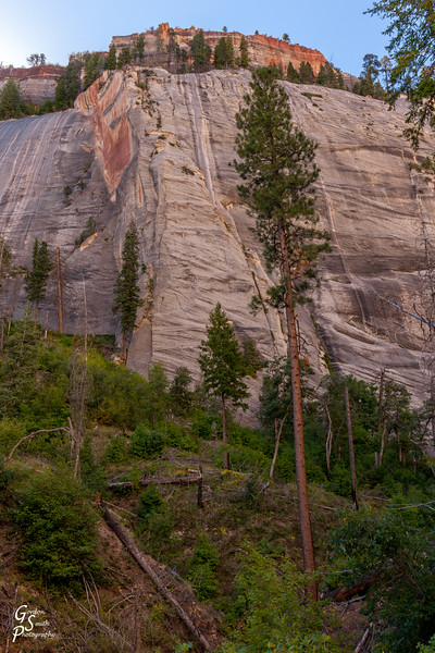 West Rim Trail Trees and Cliffs