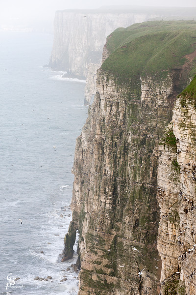 Bempton Cliffs Two Sea Arches