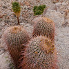 Group of 3 Cacti