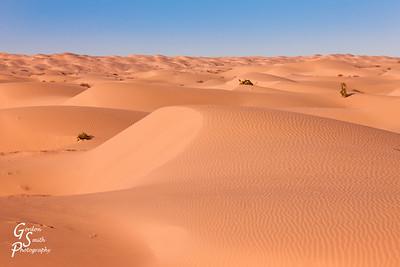 Amazing Algodones Dune Fields