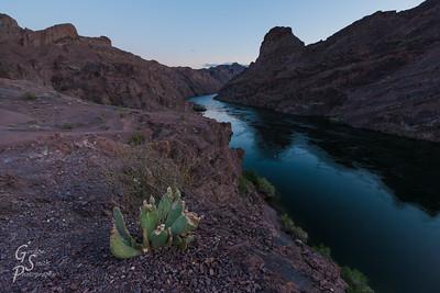 Green Cactus, Black Canyon