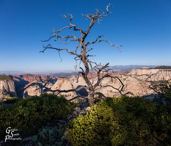 Tree Skeleton over West Rim Trail
