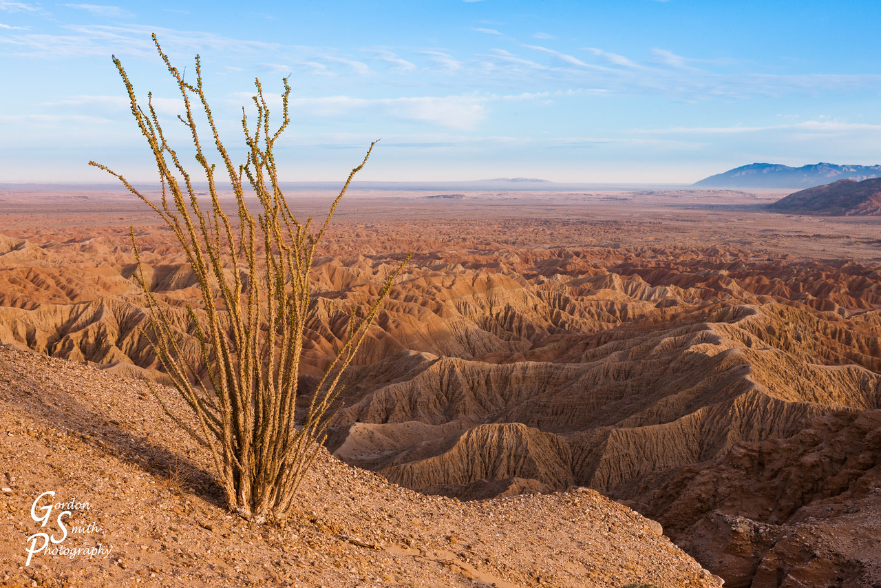 ocotillo at fonts point scenery