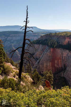 Dead Tree over West Rim Trail