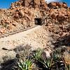 Yucca and Railroad Tracks