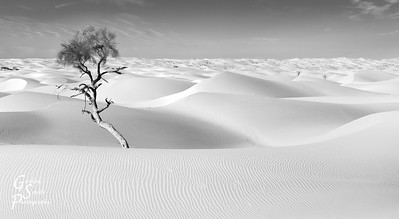 Nest and Tree in White Sand Dunes