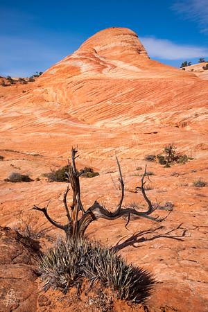 Cross Tree and Sandstone Teepee