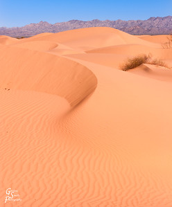 Curved Dune
