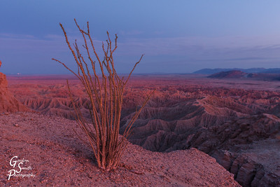 Ocotillo Over Fonts Point 2