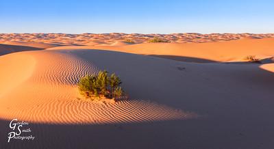 Sand surrounding a desert plant