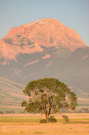 Lone Tree and Sphinx Mountain