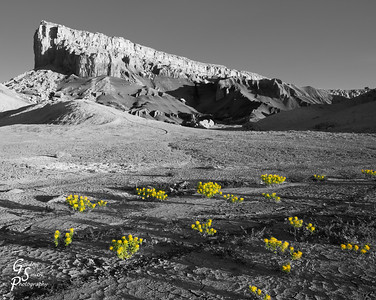 Wildflowers along the north side of Lake Powell inspired this selective coloring rendition.