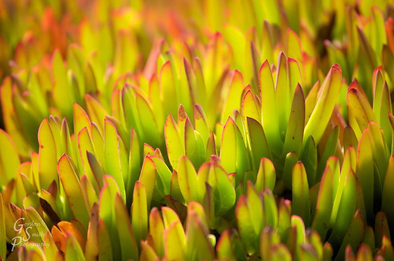 Blacklit Ice Plants