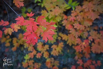 Rich in color  I used an especially open aperture to get the background leaves out of focus with this wide angle shot.
