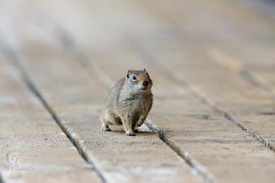 Cute little trespasser