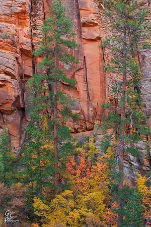 Zion Autumn Leaves