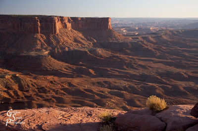 White Rim Trail  Bush