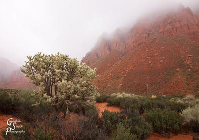 Red Desert Fog