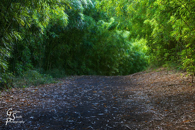 Road to Kilauea Falls