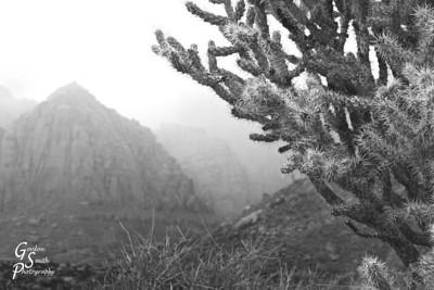 Prickly landscape