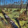 """Swampy Lands<br /> <br /> <a href=""""http://sillymonkeyphoto.com/2012/05/30/swampy-lands/"""">http://sillymonkeyphoto.com/2012/05/30/swampy-lands/</a>"""