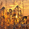 "Sunset behind some splashing water.<br /> <br />  <a href=""http://sillymonkeyphoto.com"">http://sillymonkeyphoto.com</a>"