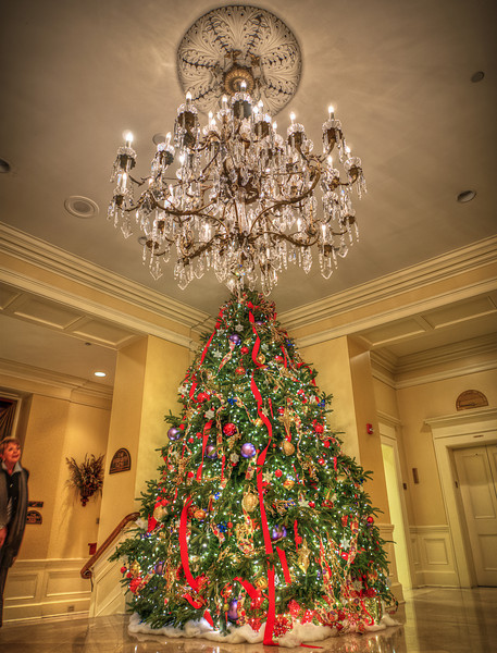 """Christmas Tree Season is Here<br /> <br />  <a href=""""http://sillymonkeyphoto.com/2011/12/03/holidays-are-coming-3/"""">http://sillymonkeyphoto.com/2011/12/03/holidays-are-coming-3/</a>"""