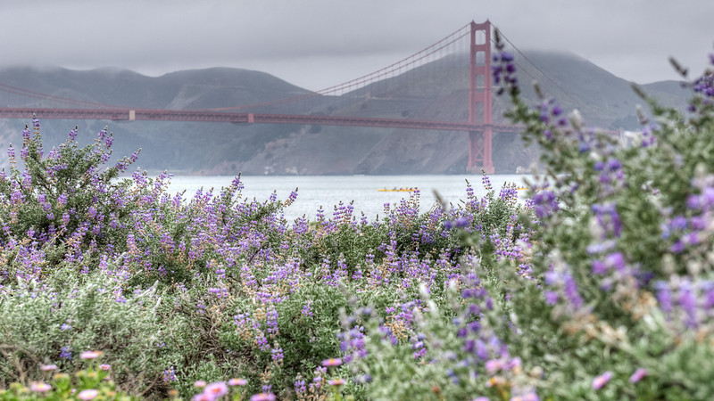 Golden Gate Bridge Flowers